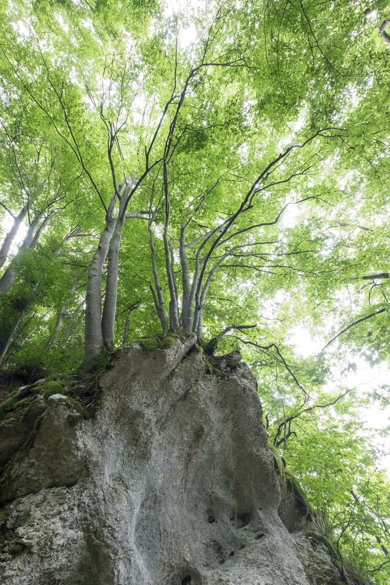 Mont grêle : l'arbre et le rocher
