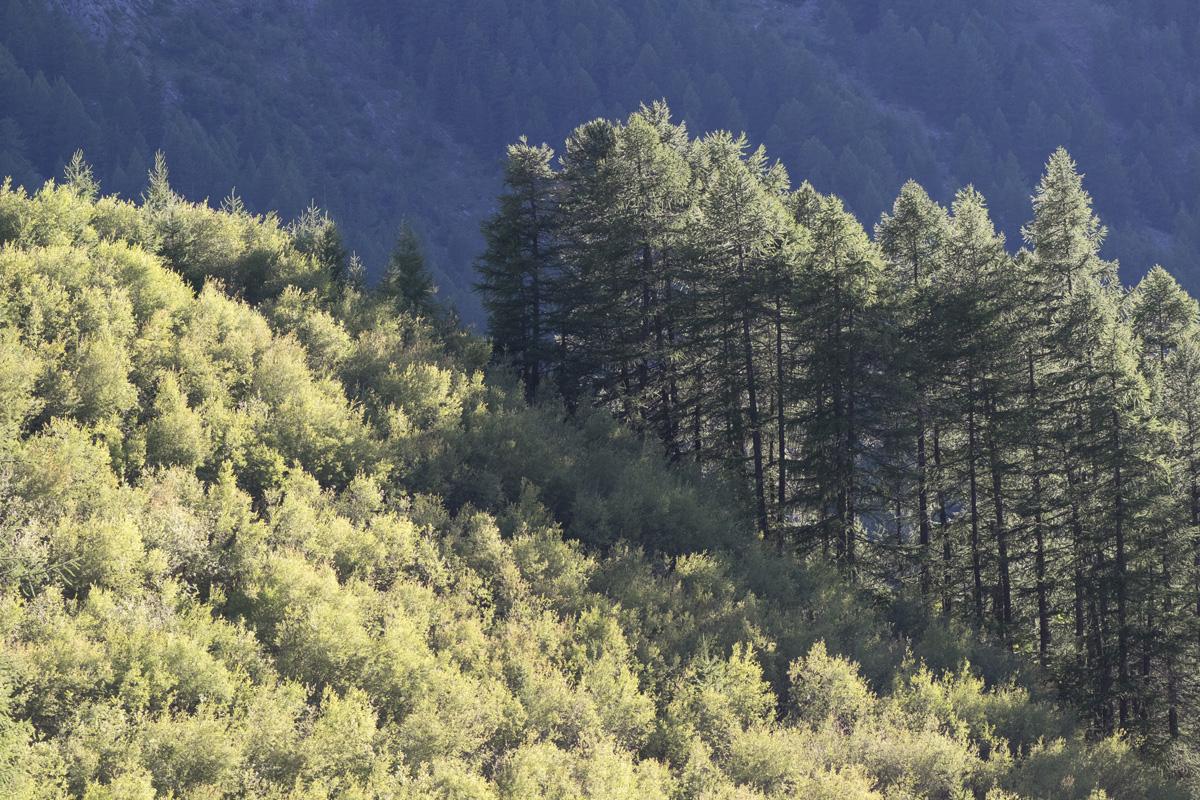 Cascades de Lillaz