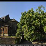 Le gros chêne de Liernu