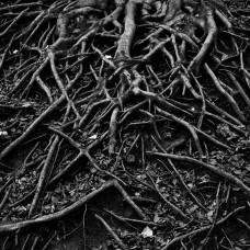 Là où sont nos racines