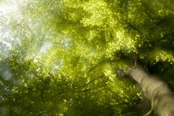 Les arbres enchantés
