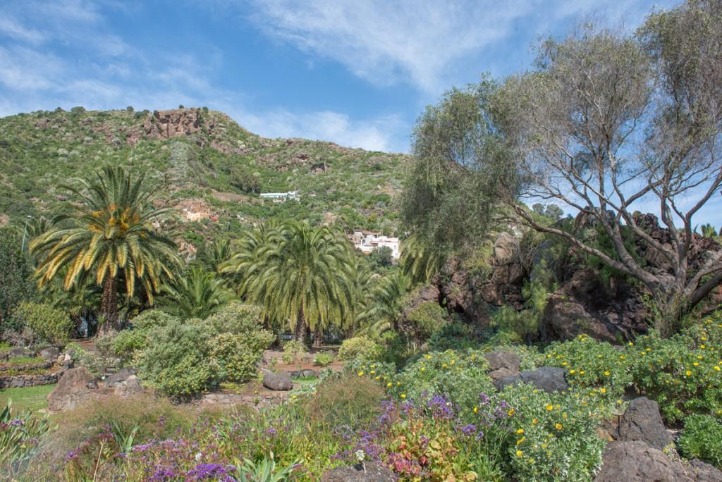 Jardín Botánico Viera y Clavijo