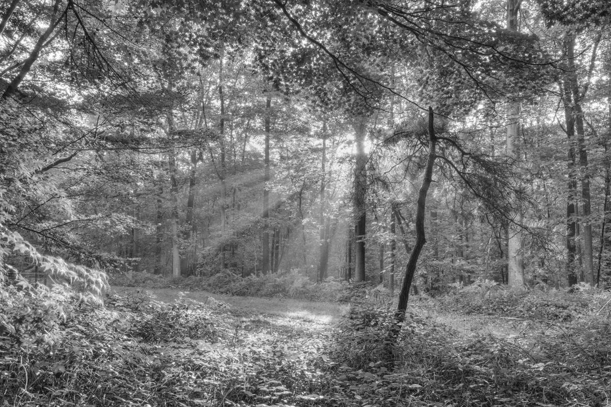 Arboretum de Tervuren