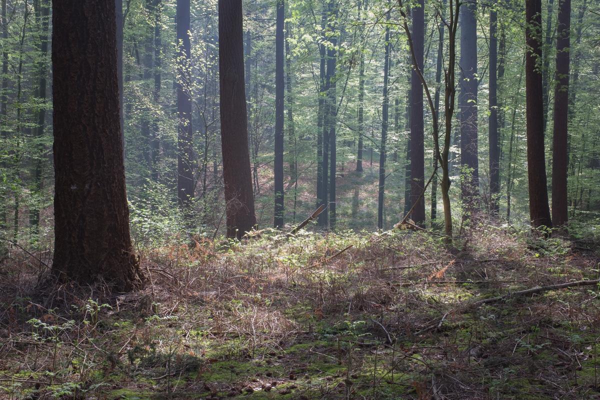 Bois de Hal