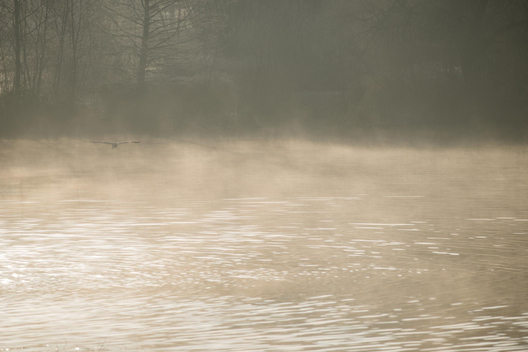 Héron perdu dans la brume