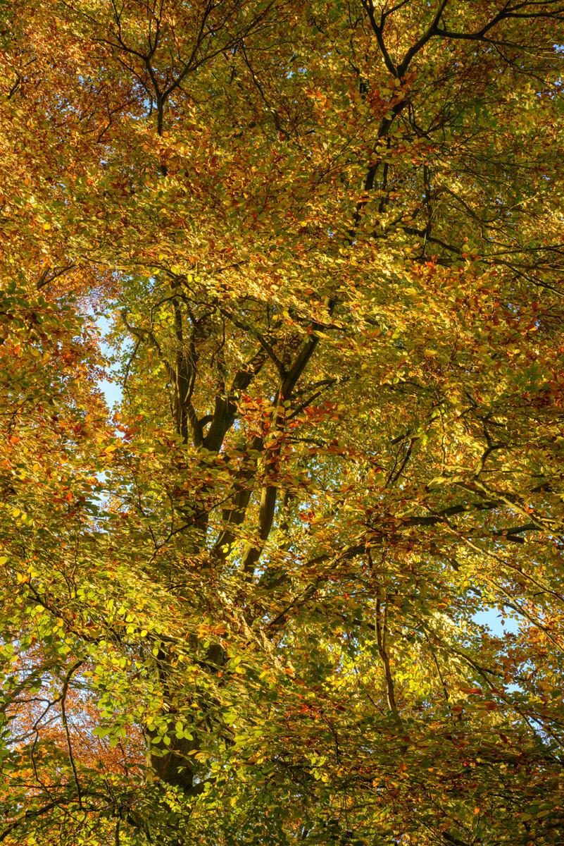 Mouvement d'automne