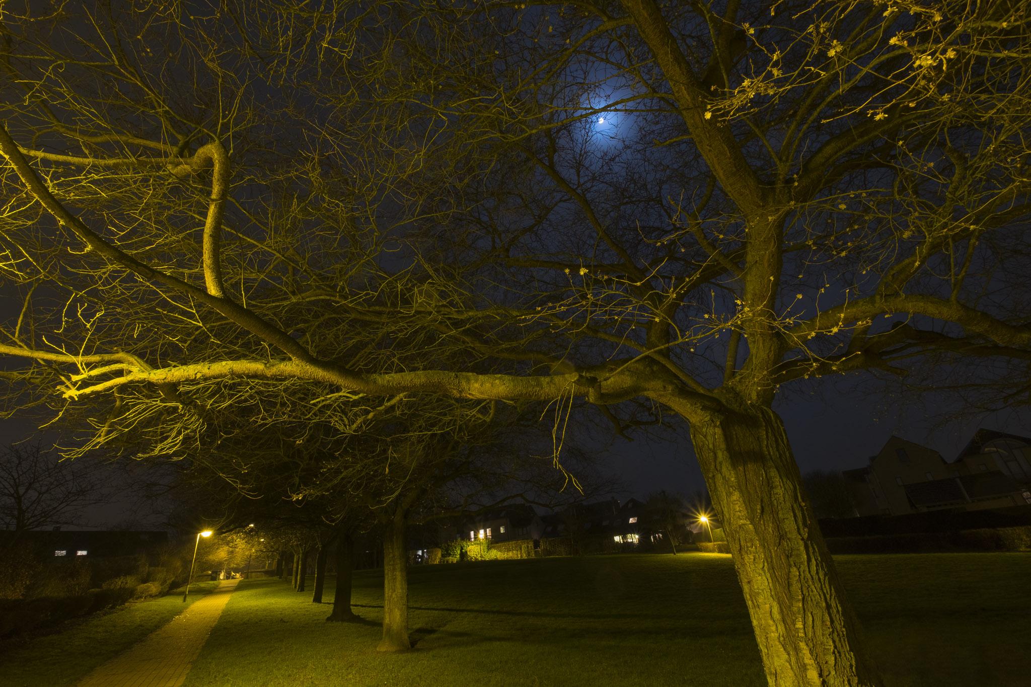 Louvain-la-neuve : jardins des rondes-bosses