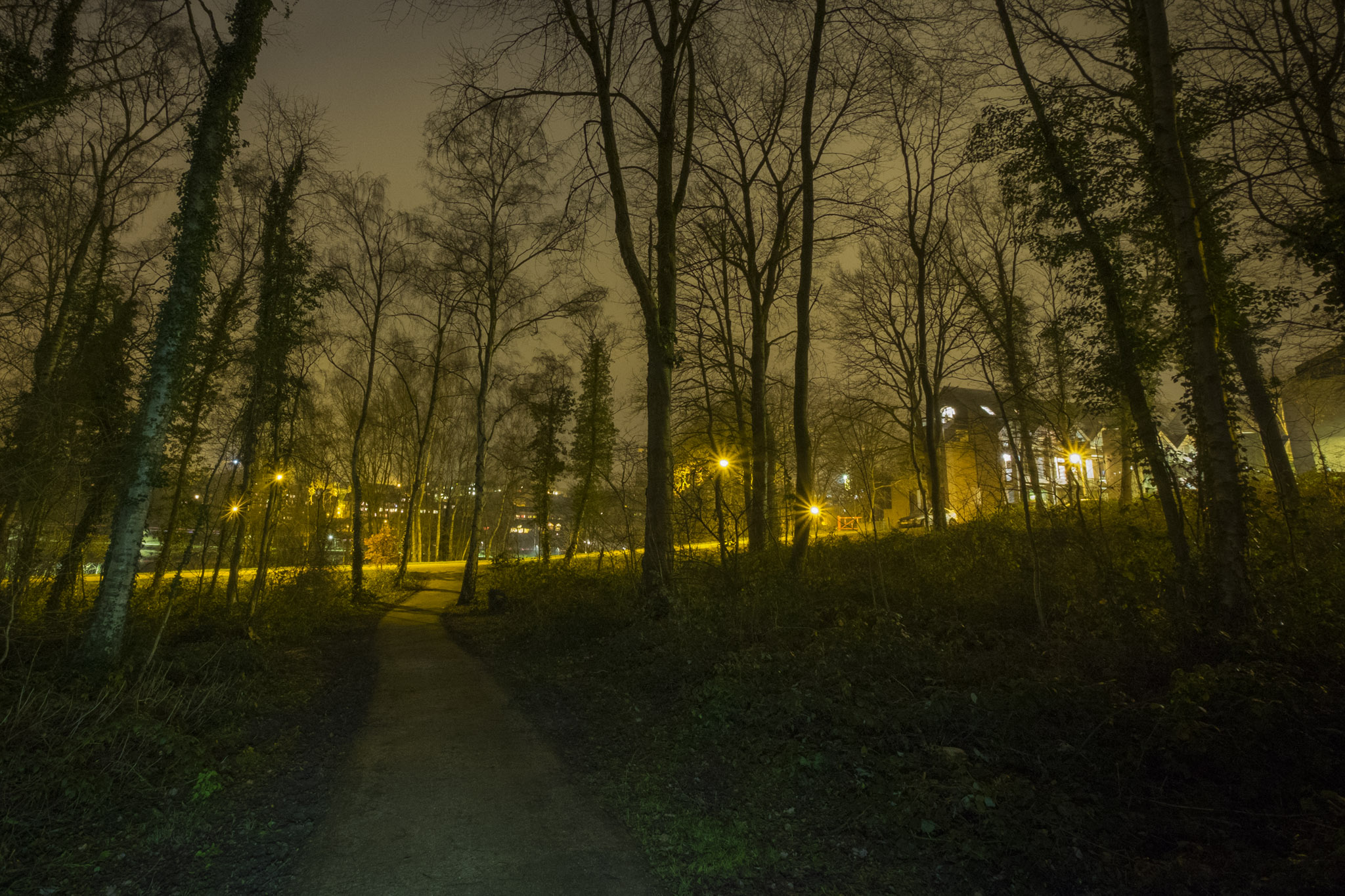 Louvain-la-neuve : bois de la palette